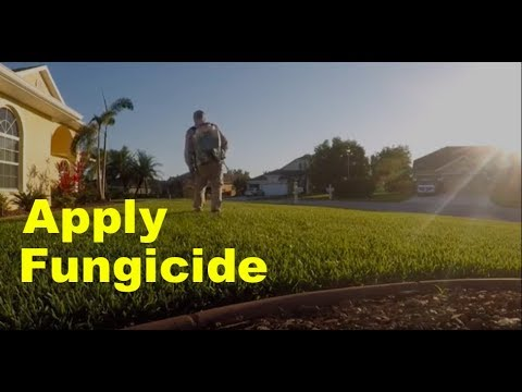 Lawn Fungicide Applications | Disease Control for Lawns