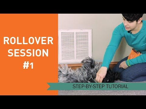 How to Train Your Dog to Roll Over - Session 1