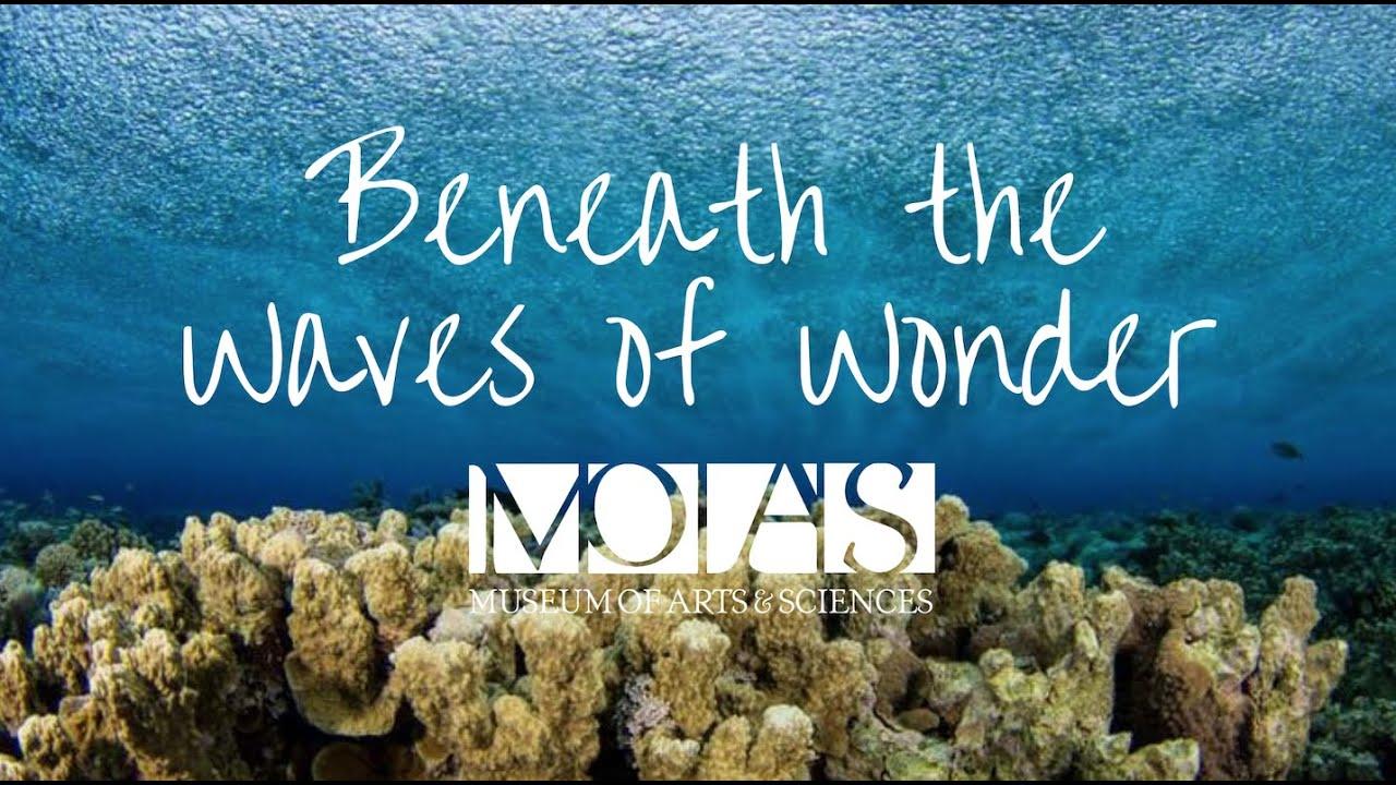 Beneath the Waves of Wonder