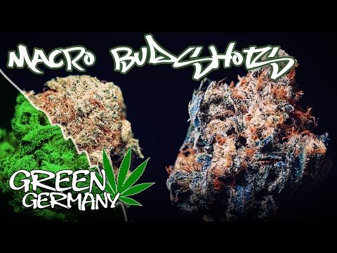 Macro Budshots with Flo (Pedanios 14/1 vs. Himalaya Kush) | GreenGermany -