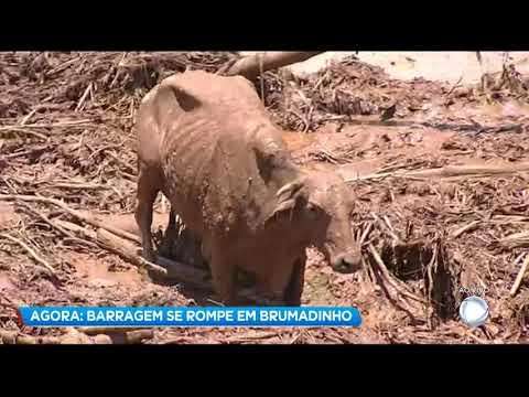 Animais ficam presos após rompimento de barragem em Brumadinho, na Grande BH