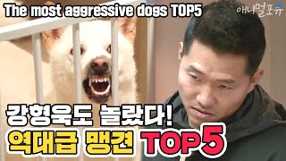 [ENG SUB] Showdown with The most aggressive dogs TOP5 [Dogs Are Incredible][It like a Cesar`s show]