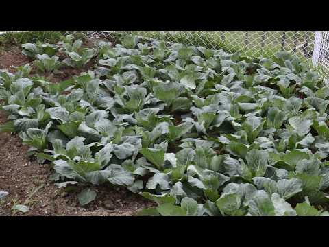 Fitness De Royale Organic Farm vegetables