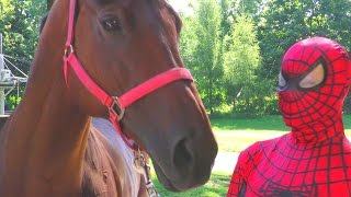 Spiderman takes care of the horse