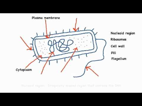 microbiology prokaryotic cell diagram labeled epiphone dot studio wiring 2 annotate the of a with functions each named structure