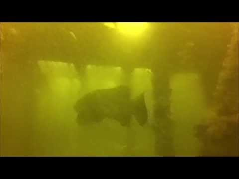 Stuart Florida Scuba Diving -  10 11 14