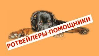 РОТВЕЙЛЕРЫ ПОМОЩНИКИ воспитание и дрессировка собаки