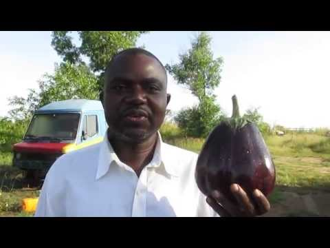 Agriculture in Congo DRC with TalaCongo