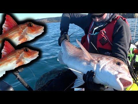 10.2kg Snapper And Gurnard Session ~ Hawkes Bay Kayak Fishing