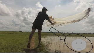 Use fishing net to catch crabs and fish in the rice field