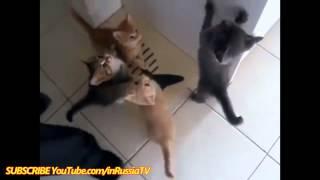 СМЕШНЫЕ ВИДЕО Кошек - Смешные котята - Подборка самых смешных видео!!!:-))))