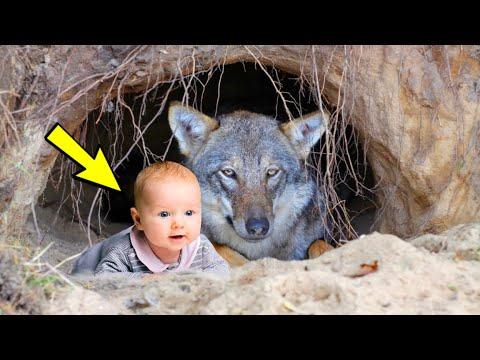 Лесник был в изумлении, увидев в логове волчицы малыша. А когда он подошёл ближе, потерял дар речи..