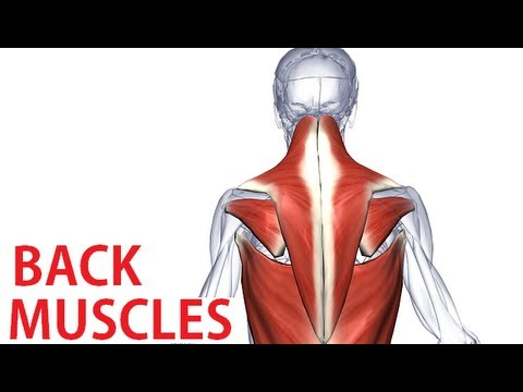 Back Muscles Anatomy - Trapezius, Latissimus, Rhomboid Anatomy - YouTube