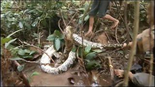 Kígyók féregtelenítése