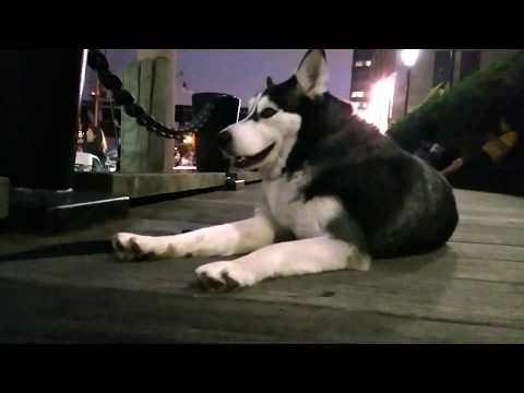Tip: Where to spend a hot summer night with your Siberian Husky