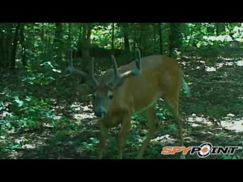 Buck Antlers Explode in Growth : S7