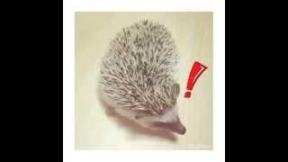 My BFF   #harry #hedgehog #pet #me #ハリー #友達 #ハリネズミ.