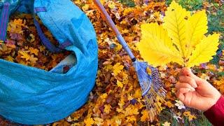 Листовои опад это мульча утеплитель компонент компоста Все у вас под ногами осенью