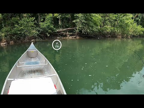 Floating The Big Piney River In Search Of MONSTER Smallmouth Bass!
