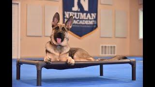 Storm (German Shepherd Dog) Puppy Camp Dog Training Video Demonstration
