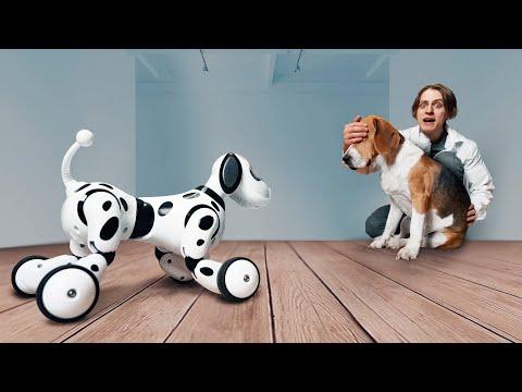 Как собака отреагирует на собаку-робота?