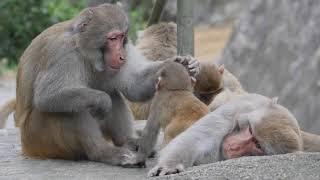 Fify & Poppy 's rivalry I - Papa is mine !