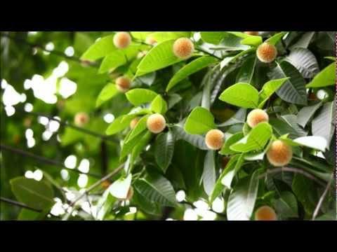 Diner free song ful badol mp3 download prothom kodom