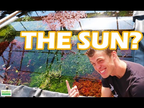 SUNLIGHT: How To Use The Sun With Your Planted Aquarium