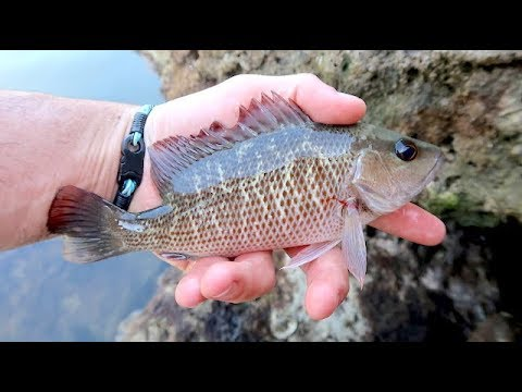 SNAPPER FISHING: CATCH AND COOK