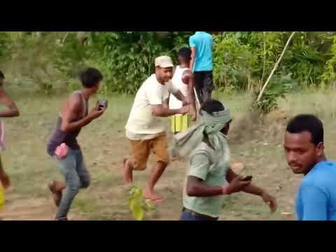 Wild Elephants clash