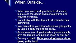 Dog Training How to: Potty Training