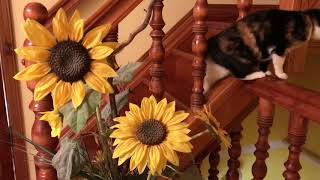 Комнатные цветы, искусственные цветы , букеты из сухоцветов(, 2018-02-08T11:08:37.000Z)