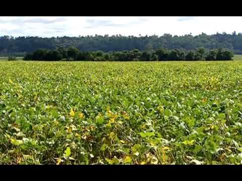 Obama appoints Monsanto shill Tom Vilsack to USDA chief