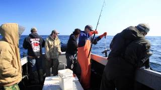All About Fishin Charters - Halibut Fishing Alaska May 2015