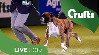 Crufts 2019 Day 2  Part 3 LIVE