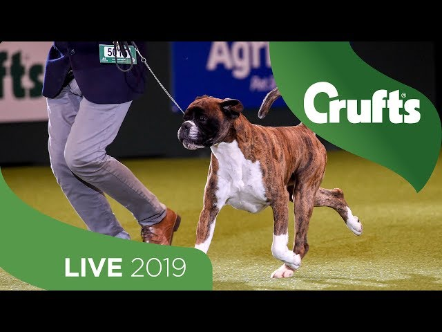 Crufts 2019 Day 2 - Part 3 LIVE