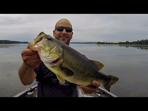 Bass fishing topwater frog potomac river youtube for Youtube bass fishing