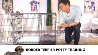 Border Terrier Potty Training from WorldFamous Dog Trainer Zak George   Train Border Terrier Puppy