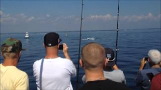 Humpback Whale In Long Island Sound on 9.19.2015