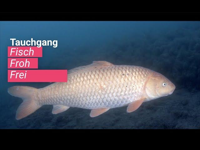 Fisch Froh Frei - heimische Fische im Süßwasser