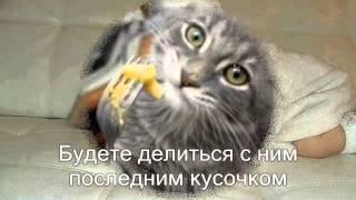 Если у тебя появилась кошка.
