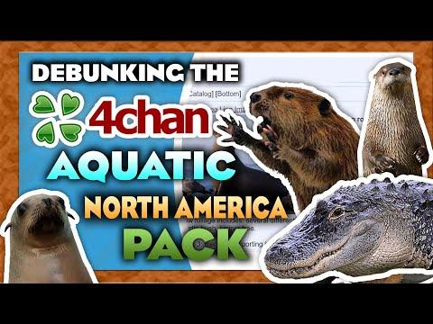 Debunking the 4Chan Aquatic North America Pack - Livestream Highlights |