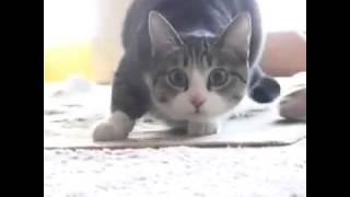 Кошка танцует под песню