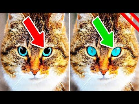 Cosas Que Tu Gato Te Está Diciendo