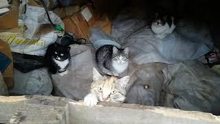 Прелестные Котята живут в  сарае. Ищут добрые руки