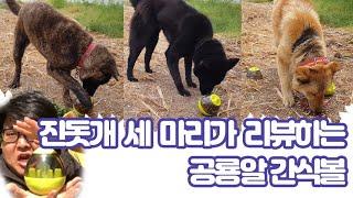 진돗개 세 마리가 리뷰하는 공룡알 간식볼, Korean…