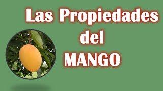 Caracterísiticas, Beneficios y Propiedades Del Mango, Nutritivas y Medicinales