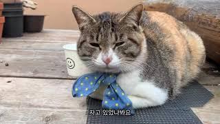 [cafe vlog]_03 고양이와 함께하는 식물카페 …
