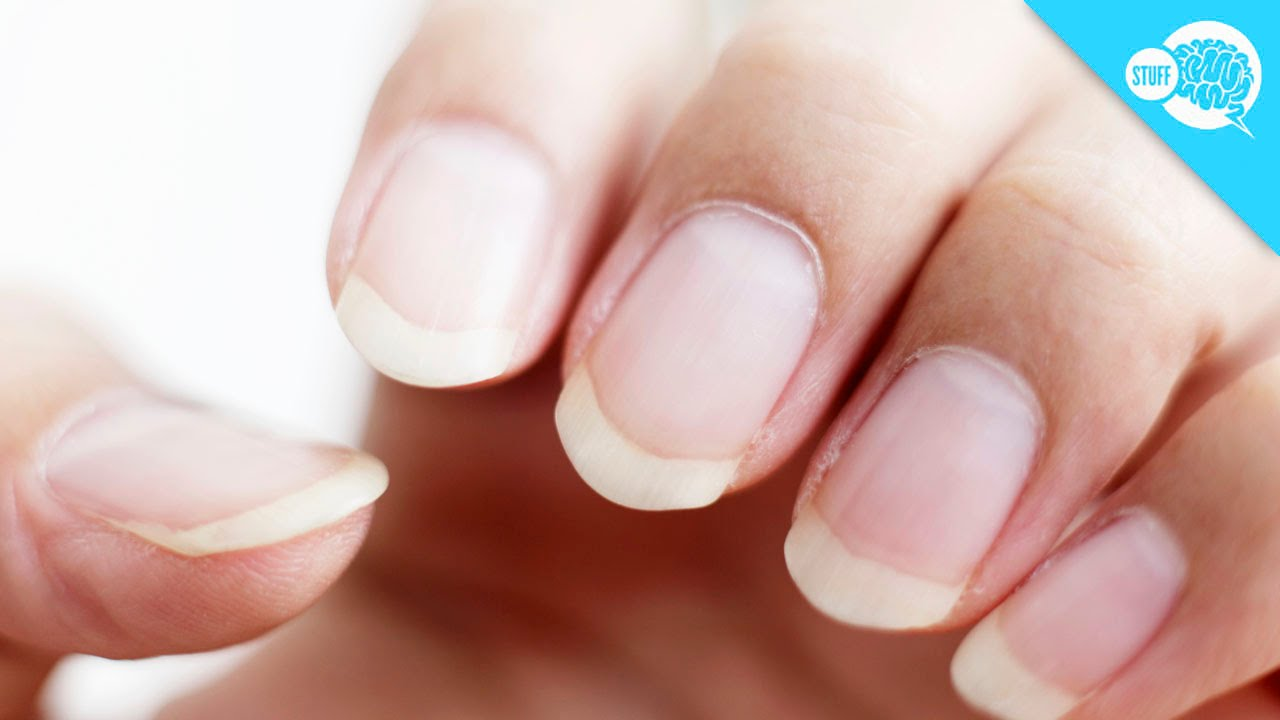how long can fingernails grow youtube
