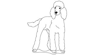 How to draw a Poodle - Easy step-by-step drawing lessons for kids